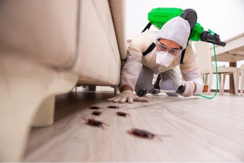 commercial pest control kent