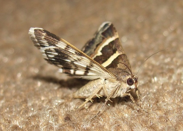 moth control kent