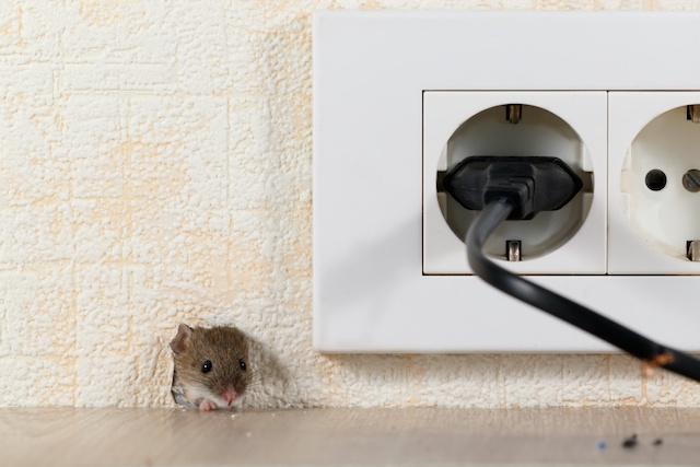 mouse control kent