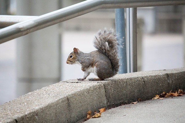 squirrel on a wall