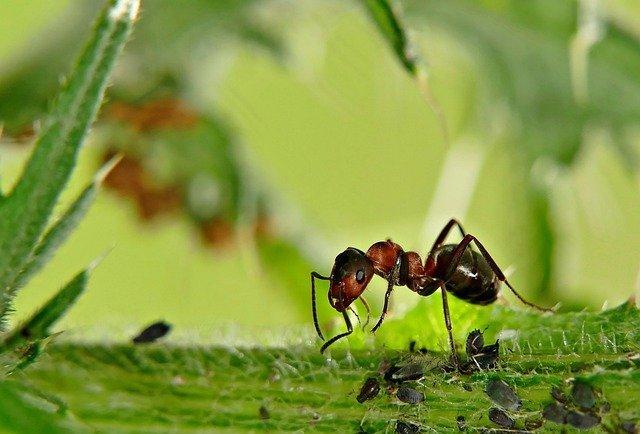 ant control kent