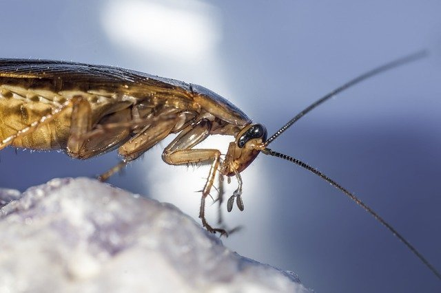 cockroach control kent